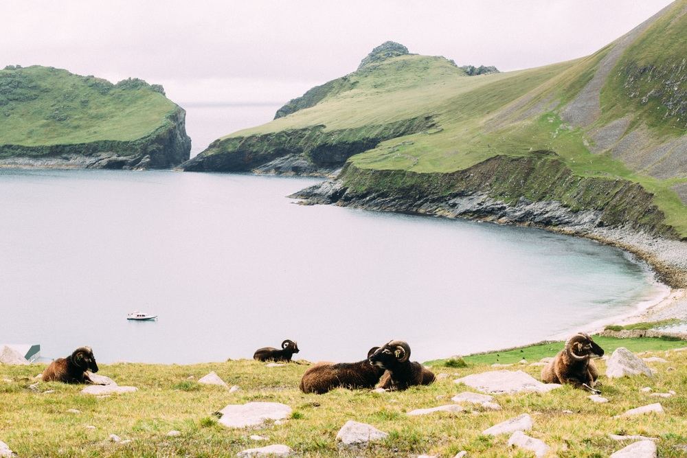 St Kilda's indigenous sheep. There was a research team on the island when I was there working on gathering information on the species.
