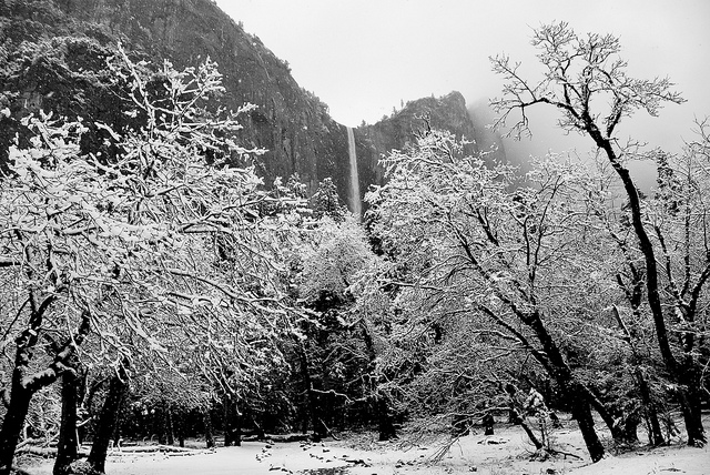 [Image description: black and white photograph of a high waterfall. The water can be seen tumbling from high on a cliff down behind the snow-covered trees in the foreground of the image.] chris.murphy / Creative Commons