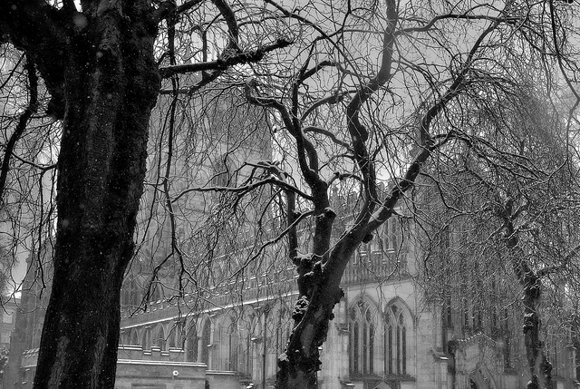 [Image description: black and white photograph of a large cathedral, partially obscured by snow-covered, leafless trees in the foreground.]  Dun.can / Creative Commons