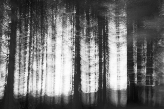 [Image description: blurred black and white photograph of a forest of thin, bare trees. There are few visible leaves; only trunks and the light filtering through them.]   Rachel Docherty  / Creative Commons