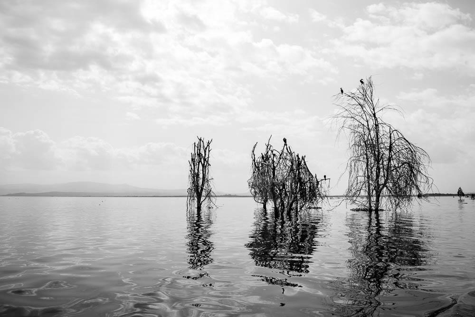 [Image description: black and white photograph of trees growing out of a lake. Their reflection shines on the water's surface. There are birds perched in their upper branches.]  Nanette Thiam