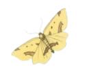 Arogt-moth-2.PNG