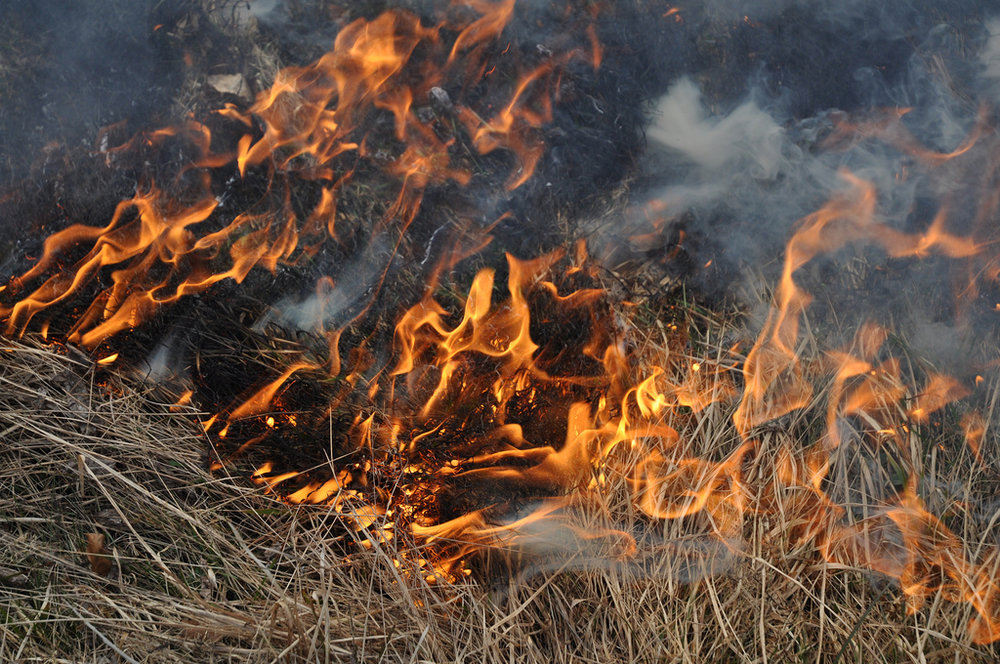 [Image description: photograph of a patch of dried grass on fire. The bottom of the image shows untouched dried grass, the center is aflame, and the burnt grass at the top of the image is partially obscured by pale smoke.]   ale  / Creative Commons