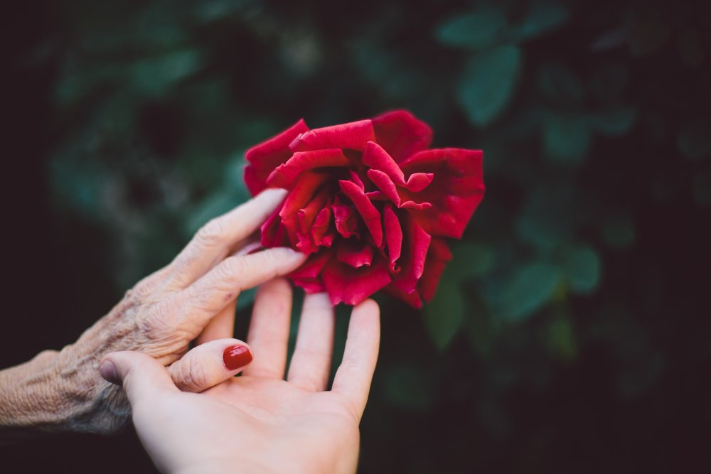 Photo by  Jake Thacker  on  Unsplash    [Image Description: The fingers of elderly hand rest on an open palm, touching a red rose in full bloom in the foreground. Leaves recede in the background.]