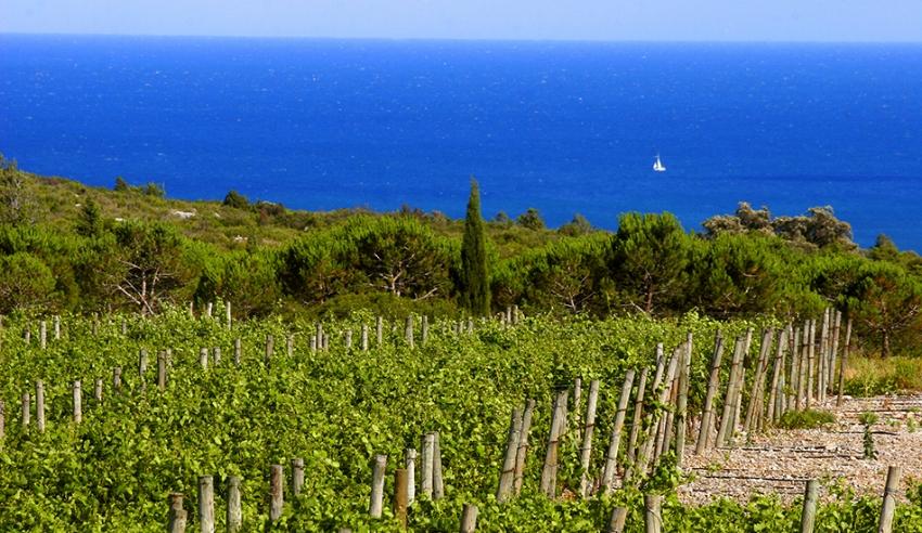 Região do Languedoc-Roussillon (França) é uma das principais produtoras de vinhos orgânicos, sustentáveis e biodinâmicos. (Crédito:  Gérard Bertrand ).