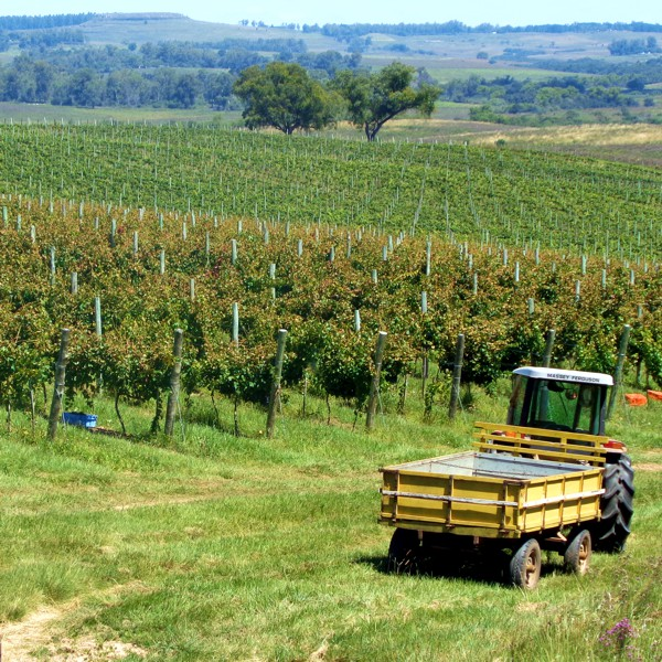 Situada na fronteira com o Uruguai, a Campanha Gaúcha (RS) tem se mostrado mais promissora para o vinho orgânico, com clima mais seco, dias mais longos e solos de melhor drenagem (Crédito:  Vinhetica ).