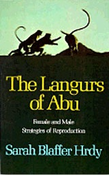 Languars of Abu.jpg