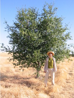 9-year-old live oak with 6-foot woman