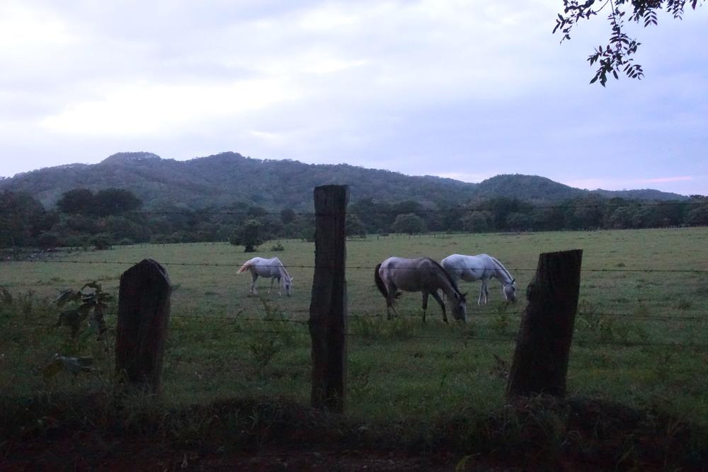 horses in guanacaste.jpg