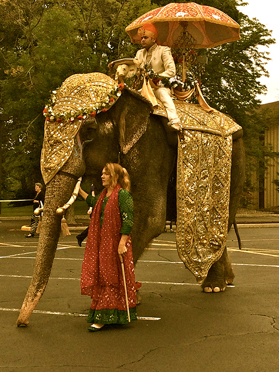 Baraat Entrance with an Elephant