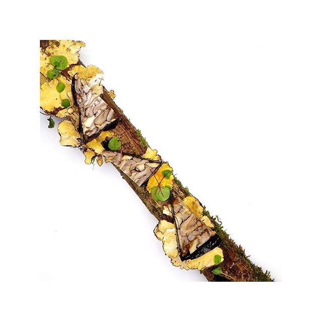 Oyster Mushroom Terrine Wrapped in Dillisk Seaweed, Served on Wood Bark with Wild Mushroom.  Photo by @kevinthornton5 #thorntonsrestaurant #mushroom #terrine #wild #oyster #dillisk #seaweed #wood #local #fresh #seasonal #irish #irishproduce #freshfood #wholefood #realfood #foodphotography #apicbase #foodlover