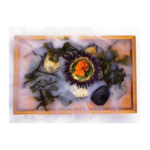 Inishmaan Sea Urchin, Sea Mist, Seaweed.  Photo by @kevinthornton5 #thorntonsrestaurant #inishmaan #sea #mist #seaurchin #seaweed #seastones #fresh #raw #irishproduce #foodphotography #edibleart #freshfood #wholefood #realfood