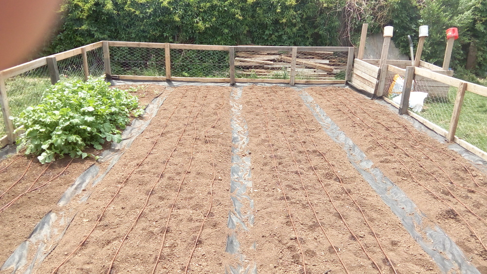 All beds with drip irrigation