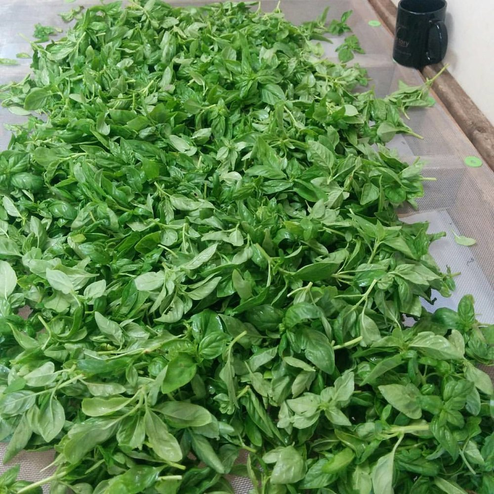 Genovese Basil - Authentic Italian flavor and appearanceGoogle Recipes