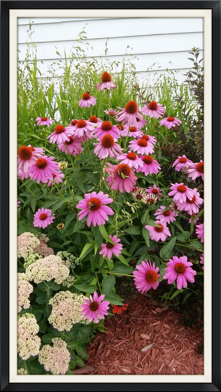 20160707_152115_HDR_resized.jpg