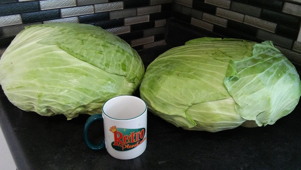 huge cabbage 2 .jpg