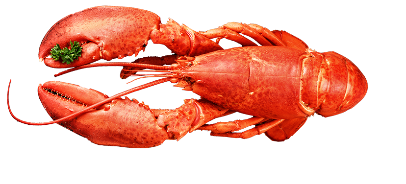 Lobster Top Seafood.png