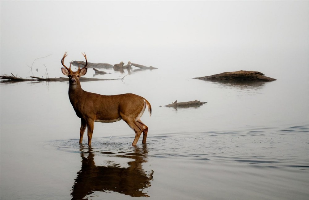 deer-in-the-water-2.jpg