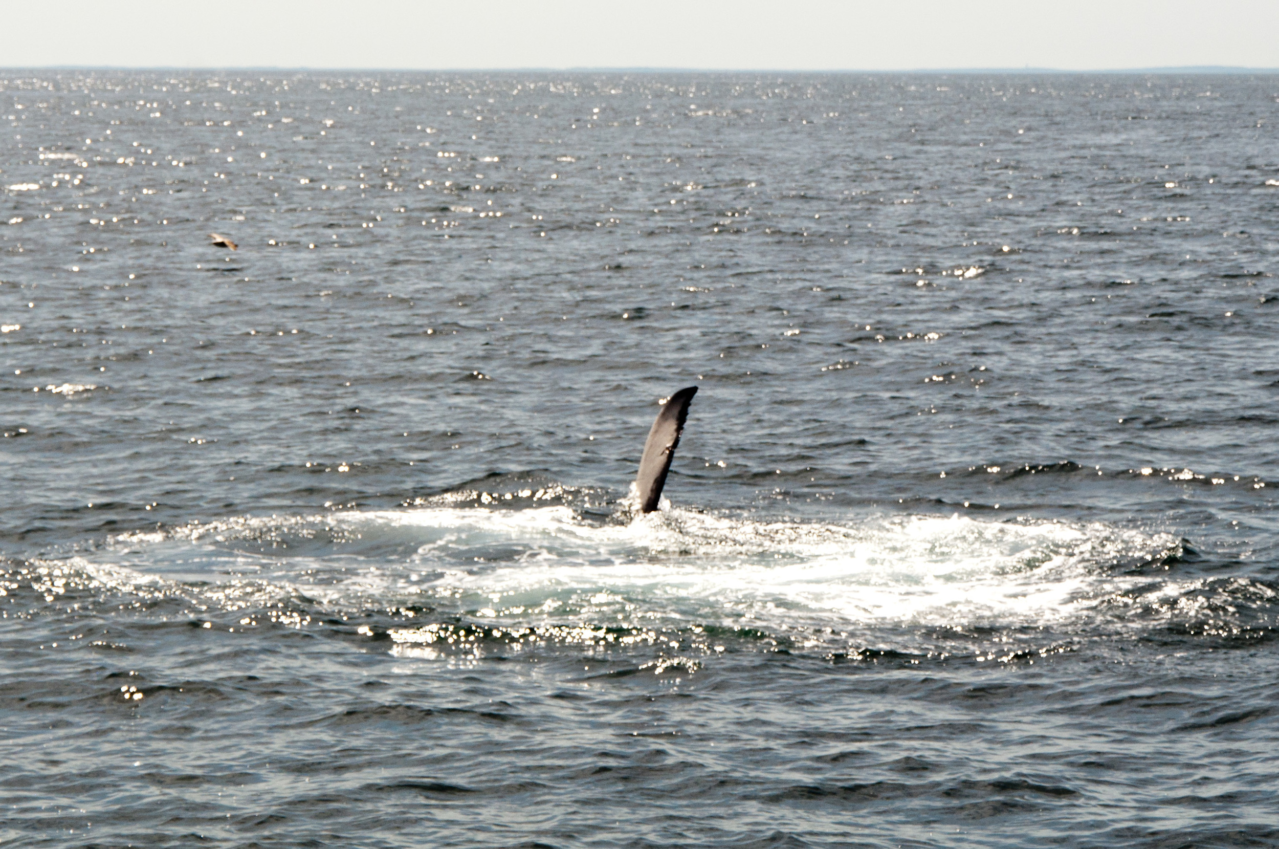 whale waving