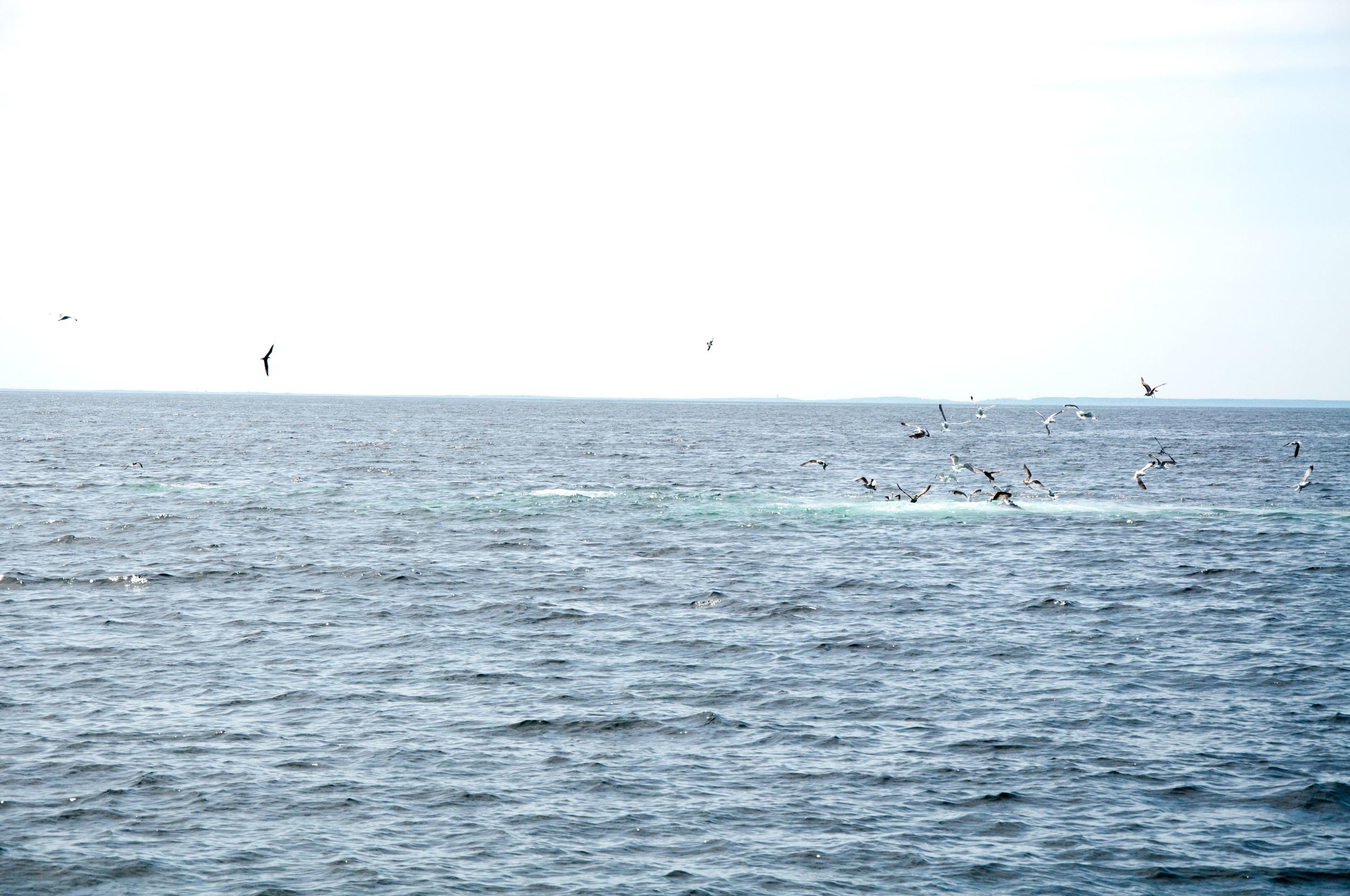 whale bubbles