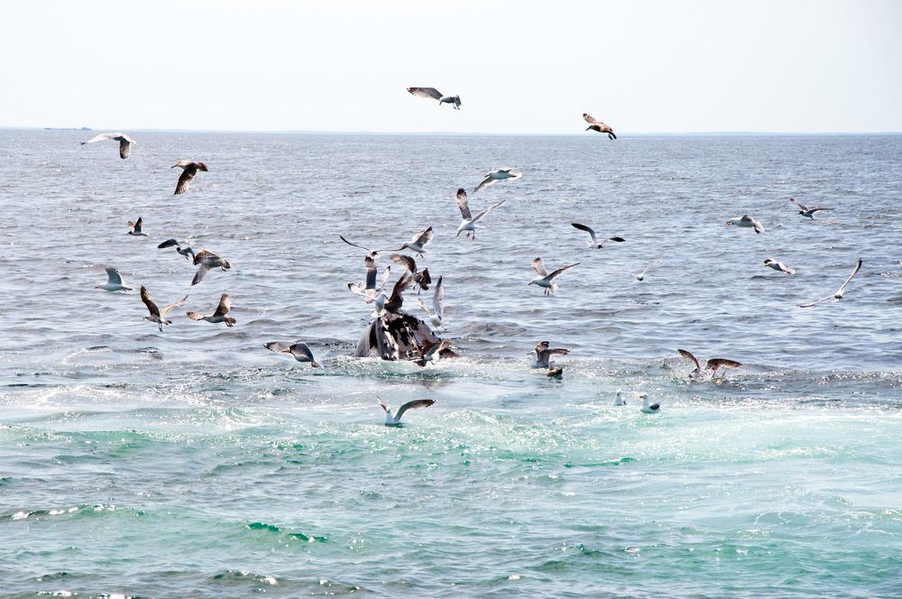whales-9.jpg