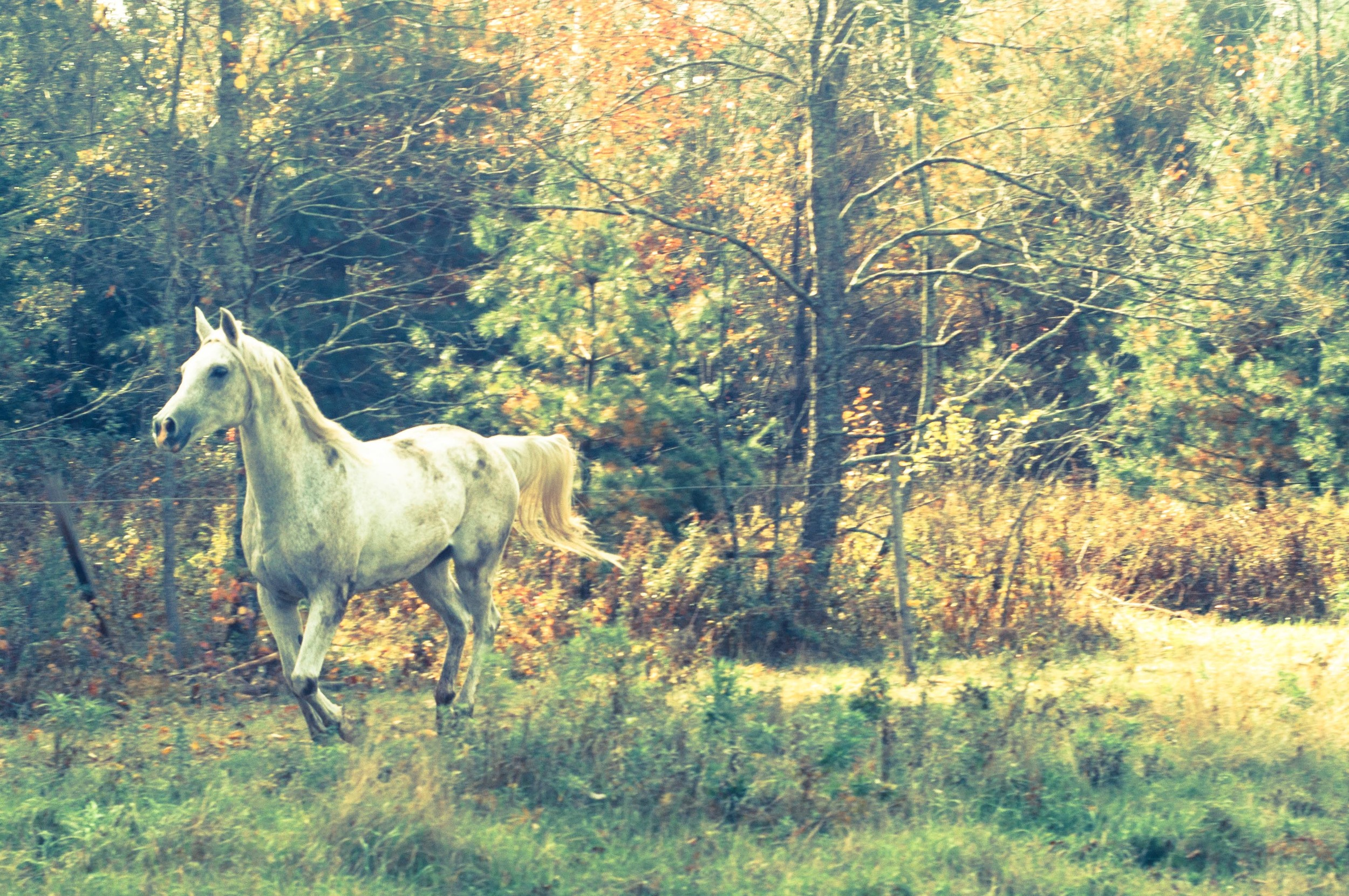 Sojourner galloping
