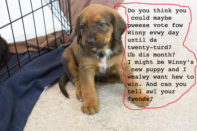 puppy wants votes