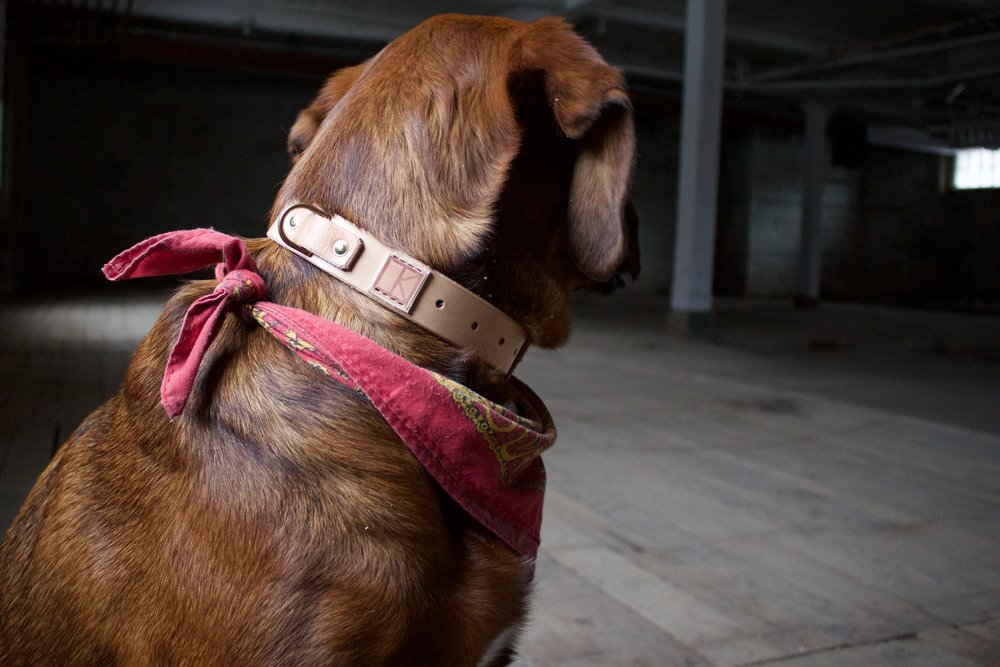 Leather Dog Collar  6.jpg
