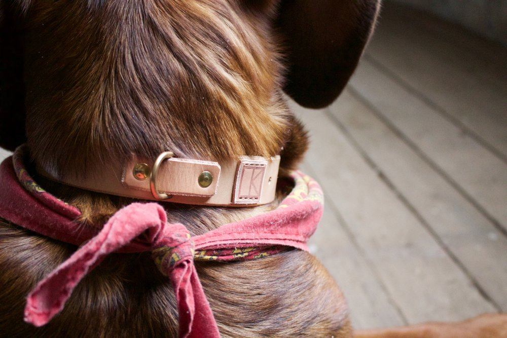 Leather Dog Collar  4.jpg