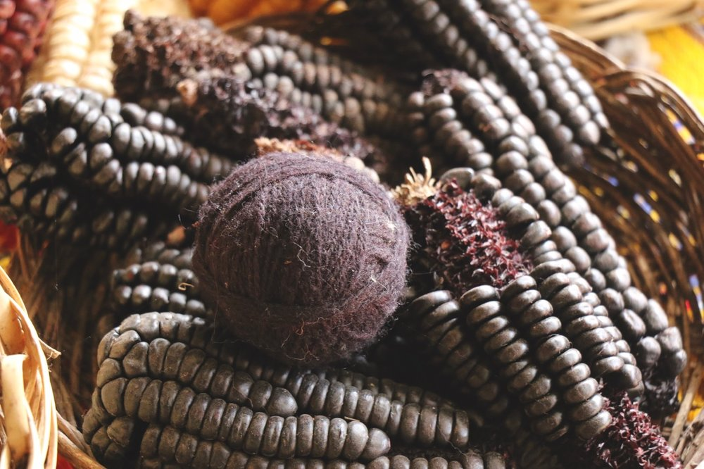 Purple corn to make various shades of purple dyes