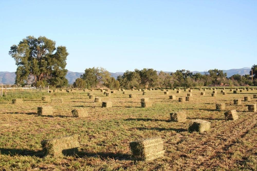 All Natural Alfalfa Hay