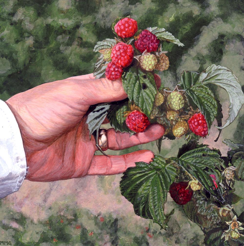 """Raspberries - 8"""" x 8"""""""