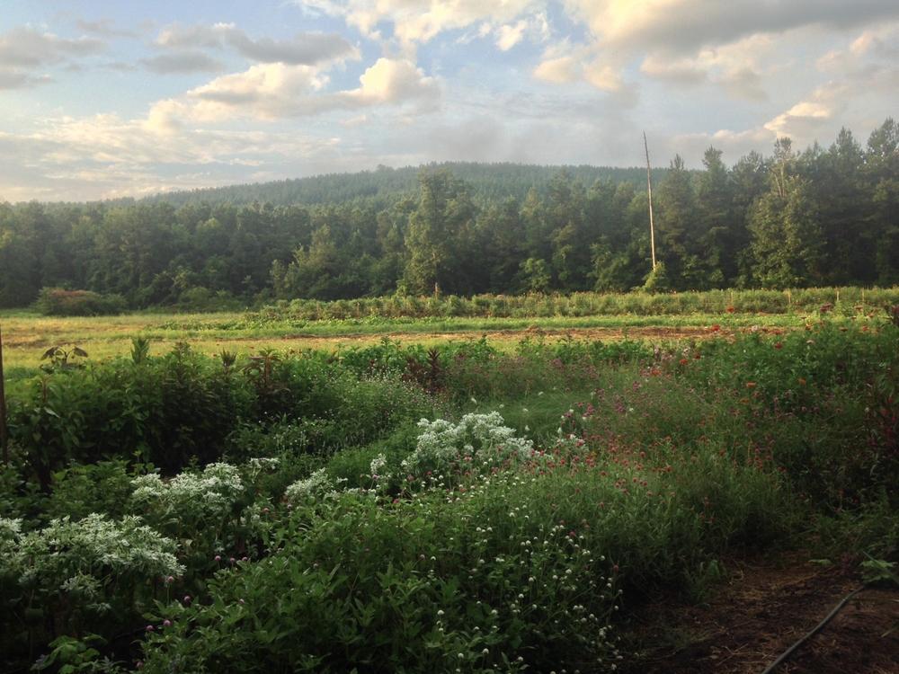 summer-farm