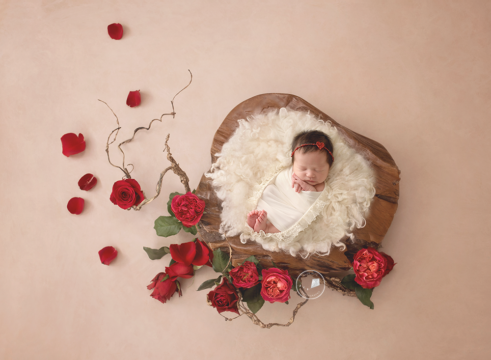 Coral-Springs-newborn-photographer-basketroses-.png