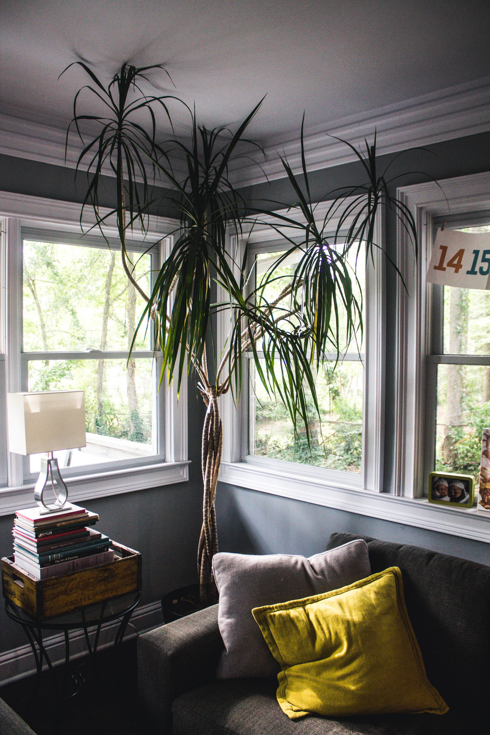 The Taleros also play with scale, introducing this large potted plant that immediately draws the eye to the large windows and cozy den.