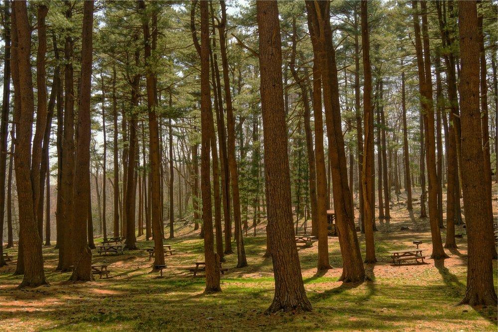Waco Tree Service
