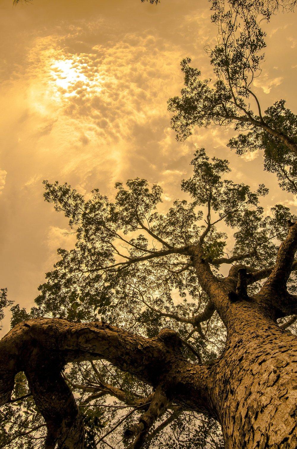 Waco Tree Service.jpg