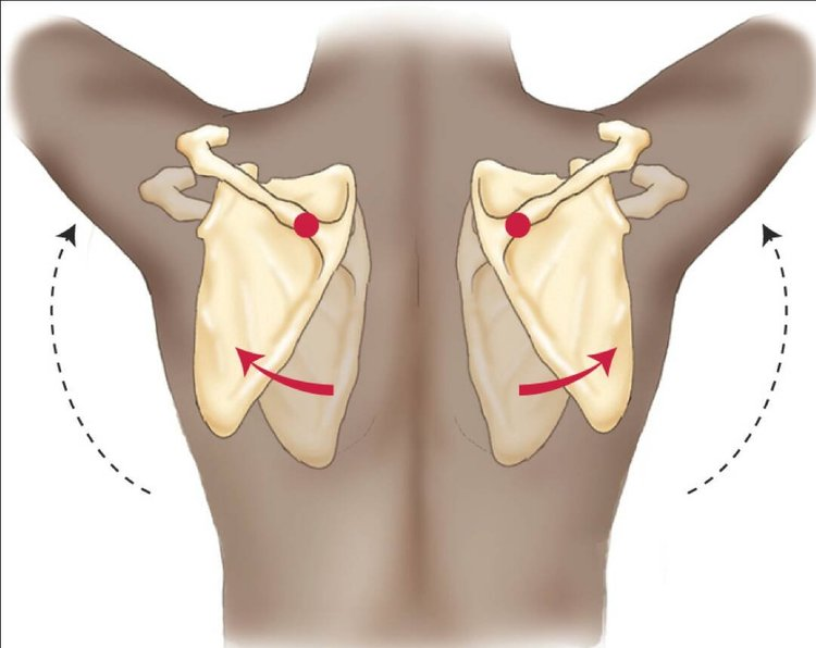 The number One Reason for Shoulder Impingement in CrossFit — Arrow ...