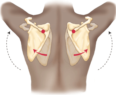 Which way should the shoulder blades be cued for pain relief?