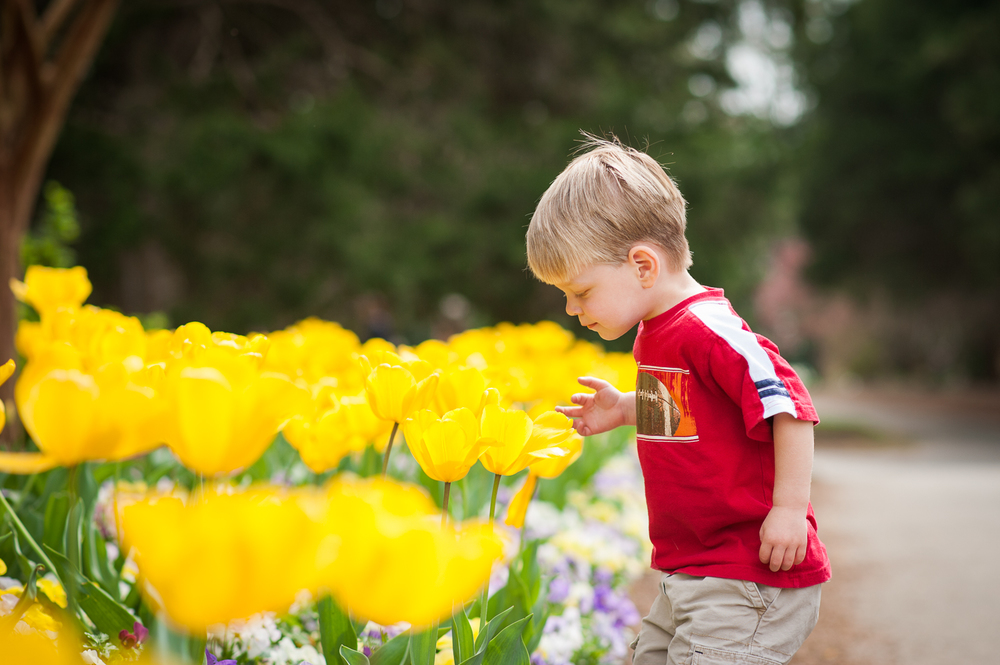 little boy smelling yellow tulips | Huntsville photographer