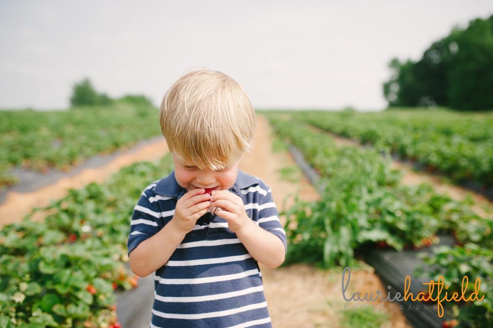 2-year-old tasting strawberry | Huntsville family photographer