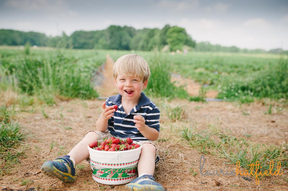 little boy in strawberry field eating berries | Huntsville photographer