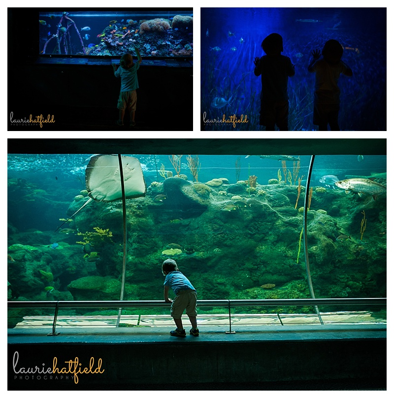 kids at the aquarium | Huntsville photographer
