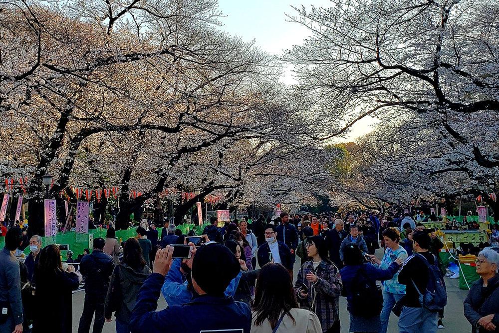 13-Japan.jpg