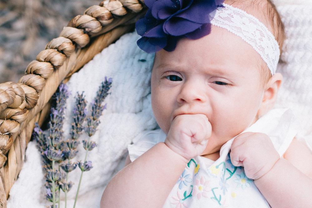 LavenderFarm49.jpg
