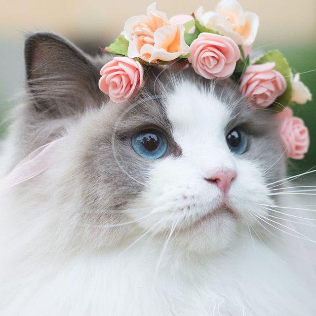 🌸 Miaou ! Le printemps s'est installé pour de bon ! 🐱🌸 Profitez bien des beaux jours ❤️