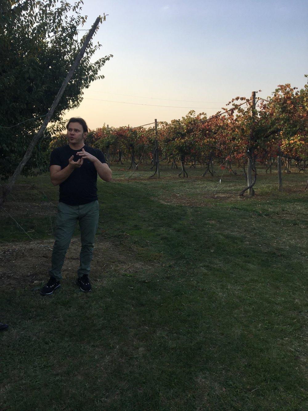 Enrico Manzini kertomassa viinin valmistuksesta köynnösten kupeessa