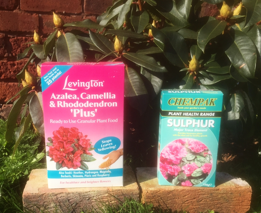 Feed your plants in April and September with a granular ericaceous food and add sulphur chips at the same time.