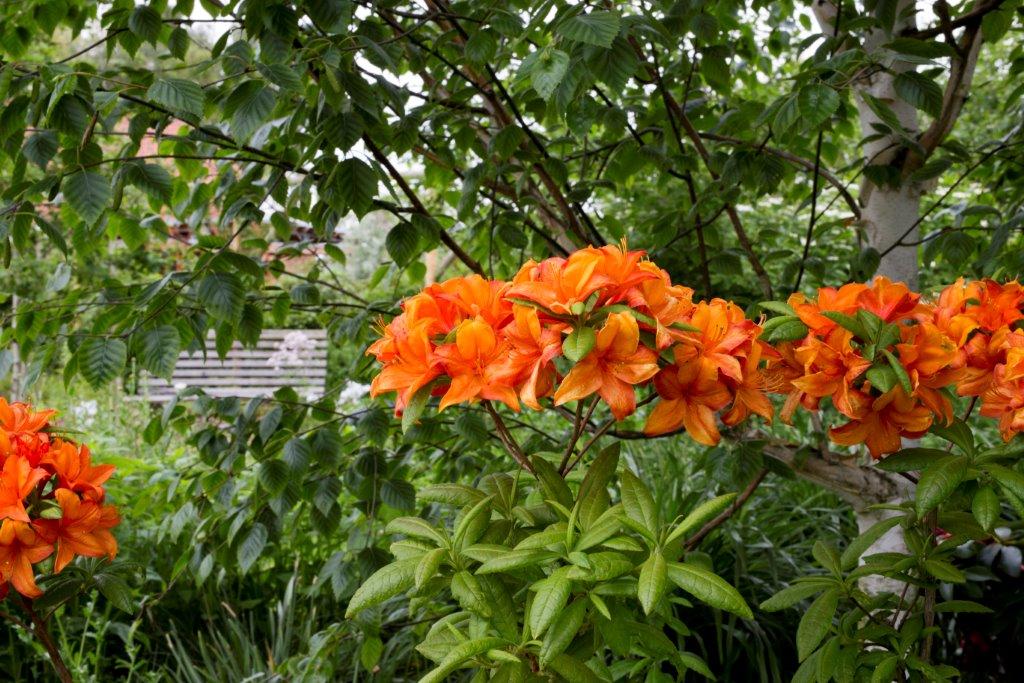 Planting in Your Garden - 10 Easy Steps — Osberton Nurseries