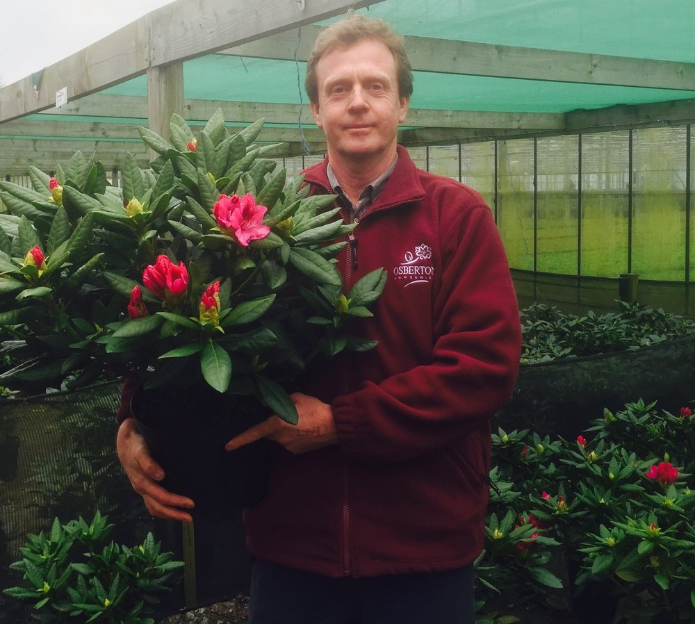 Will Murch with a rhododendron just bursting into flower.